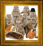 squirrels-square